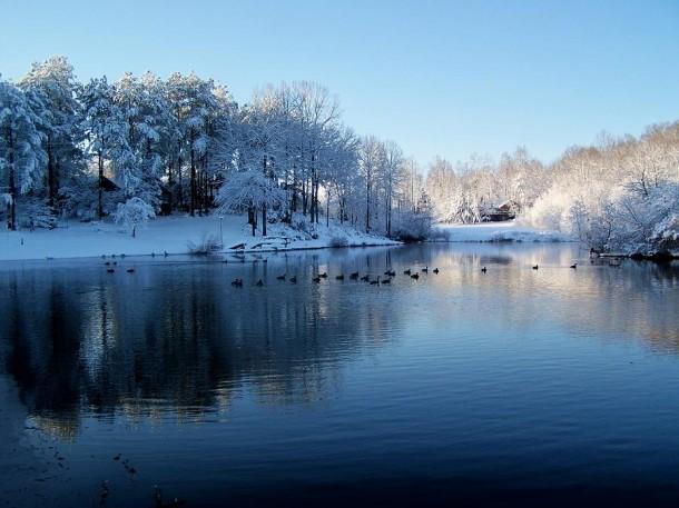 ducks-in-a-snowy-lake-robert-pennix