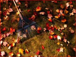 raking-leaves1